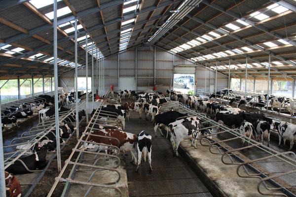 Melkveebedrijf Commijs – hoekschezuivel.nl