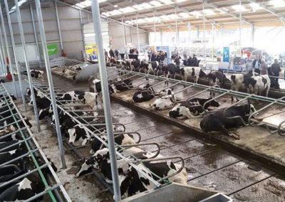 Melkveebedrijf Commijs - hoekschezuivel.nl